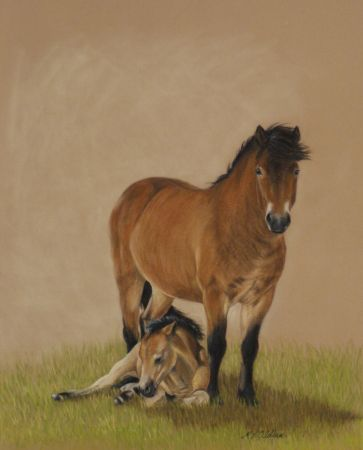 Exmoor Mare and Foal