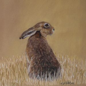 Hare in Stubble Field