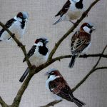 A host of Sparrows